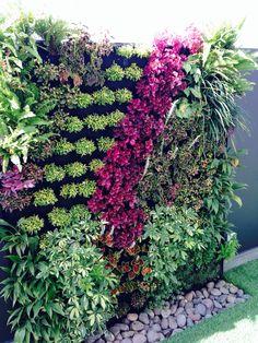 #verticalgarden #allgreen
