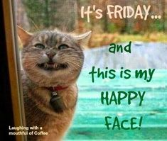 Happy Friday Humour, Happy Friday Quotes, Funny Friday Humor, Friday Cat, Friday Meme, Cute Good Morning Quotes, Good Morning Wishes, Funny Animal Pictures, Cute Funny Animals
