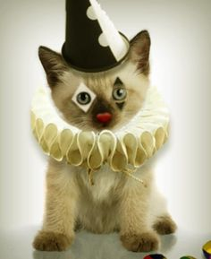 Pierrot le Chat [r] Crazy Cat Lady, Crazy Cats, Cat Dressed Up, Curious Cat, Animal Crackers, Cat Hat, Cat Costumes, Here Kitty Kitty, Halloween Cat