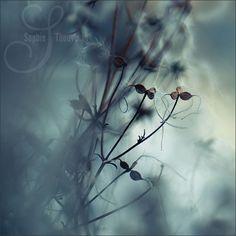 smooth winter - © sophie thouvenin - https://www.facebook.com/sophiethouveninphoto