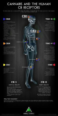 This is why #Cannabis helps so many different medical conditions. Cannabis and the Human CB Receptors