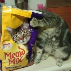 Funny Animal Pictures - View our collection of cute and funny pet videos and pics. New funny animal pictures and videos submitted daily. Crazy Cat Lady, Crazy Cats, Cute Kittens, Cats And Kittens, Silly Cats, Stupid Cat, Funny Animals, Cute Animals, Stupid Animals
