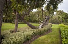 Landscape Visit: Manicured—and Wild, on Australia's Mornington Peninsula - Gardenista Landscape Architecture, Landscape Design, Architecture Design, Garden Design, Largest Countries, Topiary, Acre, Lawn, Around The Worlds
