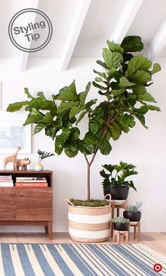 Welcome spring into your home: add style by grouping plants of different heights and types and up the seasonal vibe with woven baskets and ceramic-and-wood plant stands. Theyre a versatile design accent that can make a difference in any room because as Wood Plant Stand, Plant Stands, Interior And Exterior, Interior Design, Interior Decorating, Fiddle Leaf Fig, Deco Design, Home And Deco, Plant Decor