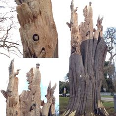 @makeupmonster_   If you're passing St. Anne's Park on the Coast Road, Raheny check out this amazing tree sculpture, we were blown away!