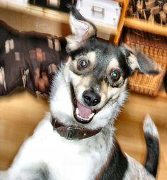 my Dog Schröder :D
