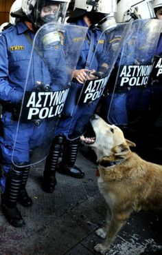 Loukanikos, The Riot Dog, Athens, Greece. Worldwide famous rebel dog, he hasn't missed a single riot, here, barking at the police. He has a Tumblr, Facebook page, Twitter and who knows what else.