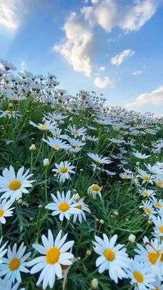 Nature Photography Flowers, Scenery Photography, Flowers Nature, Landscape Photography, Beautiful Nature Photography, Video Nature, Nature Gif, Beautiful Landscape Wallpaper, Beautiful Landscapes