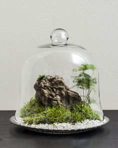 #terrarium made by NeoMi Design #moss decoration could be bought in Prague
