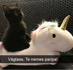 A black kitten riding a unicorn?M - Raschd - A black kitten riding a unicorn?M A black kitten riding a unicorn? Cute Funny Animals, Funny Animal Pictures, Cute Baby Animals, Animals And Pets, Funny Cats, Fluffy Animals, Animal Pics, Lol Funny, Cat Memes Hilarious