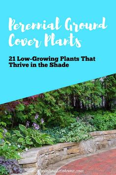 Plant these shade-loving #perennial ground cover plants under bushes and trees to help prevent weeds from growing and add some beautiful flowers to your garden. #fromhousetohome #shade #plants #gardening #groundcover #partshadeperennials