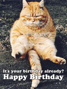 Grumpy Kitty Funny Birthday Card