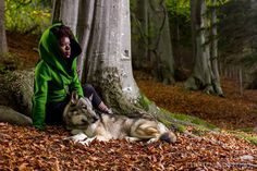 5 LIFE lessons: my journey with a wolf Life Lessons, Mindset, Husky, Wolf, Journey, Animals, Attitude, Animales, Life Lesson Quotes