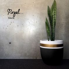 STRIPE POT