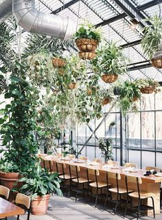indoor garden vibes - http://ruffledblog.com/our-favorite-venues-in-los-angeles/ photo Braedon Flynn
