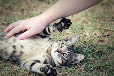 Greece kitten