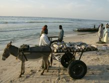 Loading up to go to fish market - Mauritania