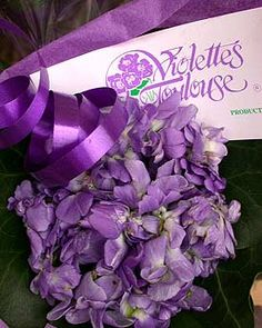 Growing with plants: Rediscovering Scented Violets