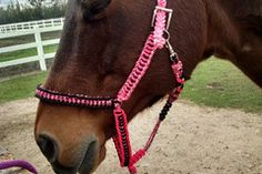 Selling: Horse Tack-Large Horse size paracord Halter