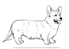 Learn How to Draw a Welsh Corgi (Dogs) Step by Step : Drawing ...