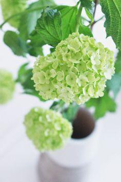 KUKKALA: Kevään vihreää