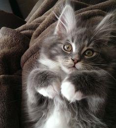 Atticus - Adorable!