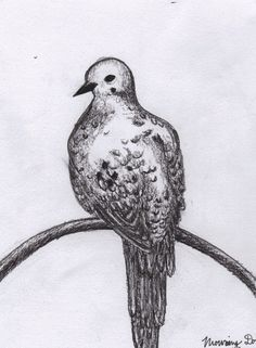 """Pencil, charcoal and ink drawing, """"Mourning Dove"""""""