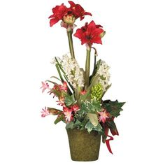 Christmas Amaryllis in Tall Square Pot ($210) ❤ liked on Polyvore