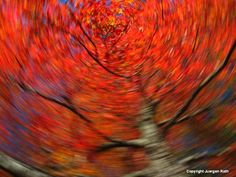 Mastering the Art of Intentional Camera Movement by Juergen Roth
