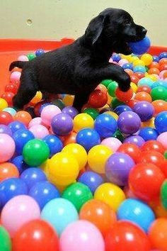 Fill up a pool with water and tennis/play balls for the summer