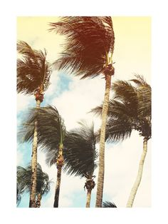 Add a tropical breeze to your home decor with a photography wall art print from Minted.