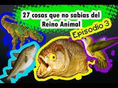 27 cosas que no sabias del (Reino Animal).  Episodio 3.  #ElCondorMilenario,  #Curiosidades, #CosasQueNoSabias, #CosasDeLosAnimales, #Aves, #Animales, #Peses, #Fauna, #PlanetaTierra, #ElMundo, #Insectos, #Flora, #MundoCurioso, #CosasQueNoSabiasDeLosAnimales, #TodoSobreLosAnimales, #ReinoAnimal #MundoSalvaje,  #27CosasQueNoSabias, #27CosasQueDesconocías,