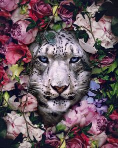 Superb Surreal Animal Artworks By Andreas Häggkvist - Superb Surreal Animal Art . - Superb Surreal Animal Artworks By Andreas Häggkvist – Superb Surreal Animal Artworks By Andreas - Amazing Animals, Most Beautiful Animals, Beautiful Creatures, Tier Wallpaper, Animal Wallpaper, Animals And Pets, Baby Animals, Cute Animals, Animals Planet