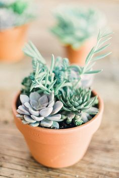 Succulents are the perfect easy gift or party favor