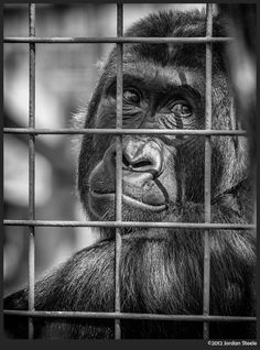 Sad Wild Animals in Zoo (3)