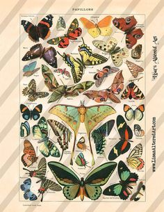 Digital Collage Sheet Vintage Papillon Images Butterflies