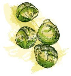 Brussels sprouts! #spruiten #illustration