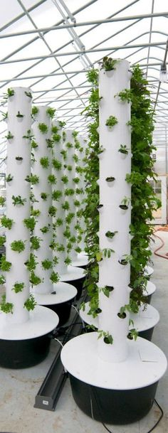 Hydroponic Gardening Vertical farm design More - The military taught Evan Premer not to waste time fixing a problem. So he's been quick to start up his own high-tech farm operation in Denver.
