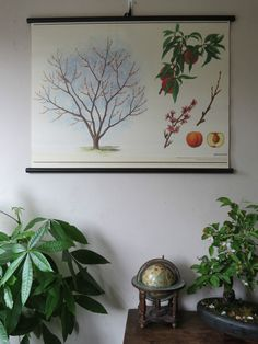 They are printed on quality paper and then backed with canvas and it has black wooden poles top and bottom and a hanging strap. Beautifully illustrated It depicts an peach tree and its fruits, seeds, blossom, leaves and buds.   eBay!