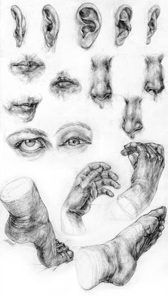 ears-mouths-noses-eyes-hands-feet by s-u-w-i on DeviantArt ears-mouths-noses-eyes-hands-feet by s-u-w-i on DeviantArt. drawing deviantart ears-mouths-noses-eyes-hands-feet by s-u-w-i on DeviantArt Pencil Art Drawings, Realistic Drawings, Art Drawings Sketches, Drawings Of Hands, Human Anatomy Drawing, Anatomy Art, Body Anatomy, Art Du Croquis, Nose Drawing