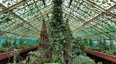 Botanic Garden , Wrocław , Poland