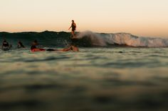 Sea, sex & sun — caseyripperphoto:   Gavin Robinson. Noosa Heads,...
