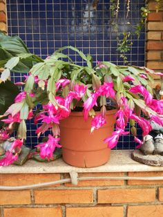 Flor de maio da Cris