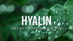 Unusual Words, Rare Words, French Language Lessons, French Expressions, Writing Lessons, Phobias, France, Love Quotes, Names