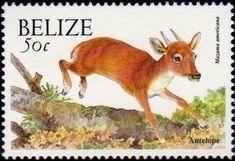 Stamp: Red Brocket (Mazama americana) (Belize) (Native Animals) Mi:BZ 1226I,Sn:BZ 1124