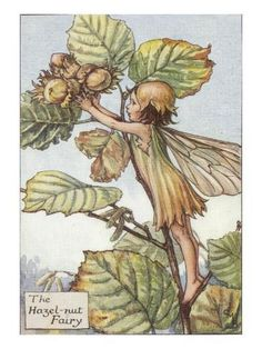 "Vintage print 'The Hazel-nut Fairy' by Cicely Mary Barker from ""The Book of the Flower Fairies""; Poem and Pictures by Cicely Mary Barker, Published by Blackie & Son Limited, London [Flower Fairies - Autumn] Cicely Mary Barker, Flower Fairies, Autumn Fairy, Vintage Fairies, Fantasy Illustration, Fairy Art, Faeries, Illustrators, Fairy Tales"