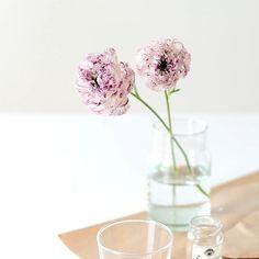 このお花はなんと言う名前なのでしょう。せっかく聞いたのにすっかり忘れてしまいました。チャウチャウというイヌの顔に似ていますね。(似てませんか?) #北欧暮らしの道具店#花#お花#ザ花部#花のある暮らし#花のある生活#朝#あさ#朝時間