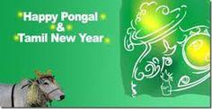 Happy Pongal, Literature, Movies, Movie Posters, Films, Film Poster, Popcorn Posters, Cinema, Film Books