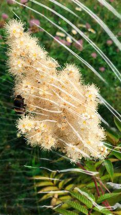 Plastic Flowers, Dandelion, Plants, Plant, Taraxacum Officinale, Dandelions, Planting, Planets