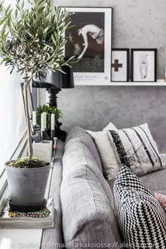 20 Trendy Ideas For Black Olive Tree Indoor Home Indoor Olive Tree, Indoor Trees, Potted Trees, Black And White Living Room, Living Room Grey, Black Olive Tree, Feng Shui Interior Design, Farm House Colors, House Smells